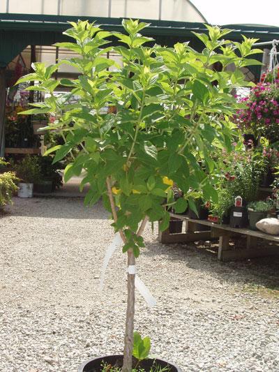 Whiteteail acres garden center for Garden information sites